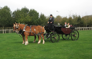 Horse & carriage service